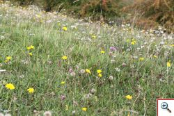 wildflowers at avebury.jpg